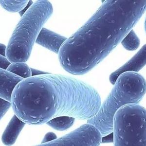 百益纯益生菌:国人肠道健康守护者