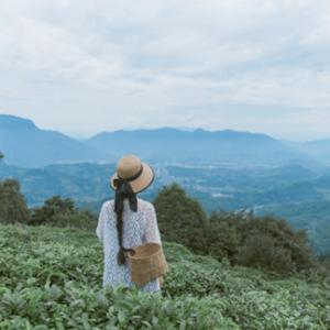 浪淘天地拟斥巨资收购千年茶树,打造中国极品茶第一品牌